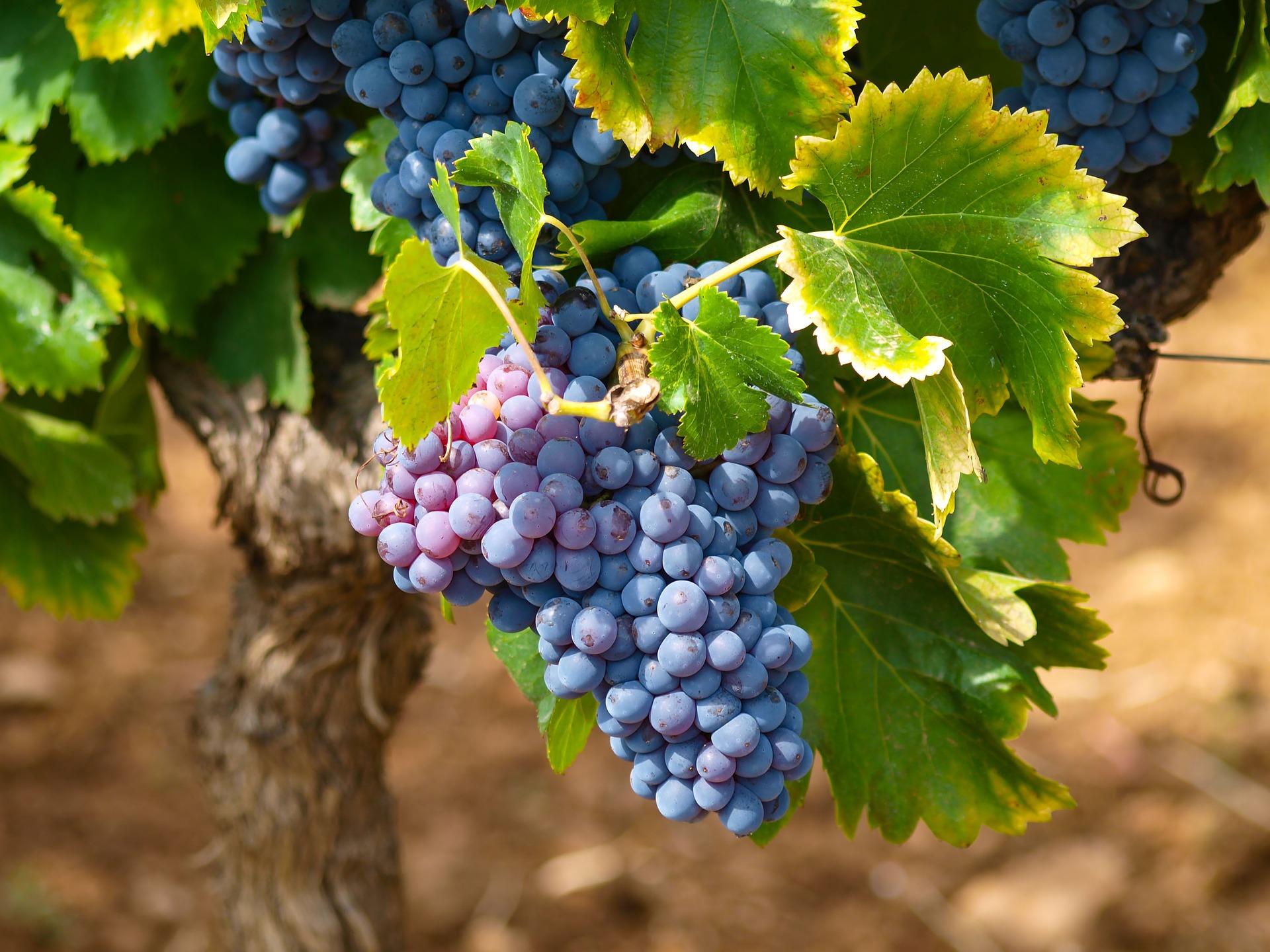 El enoturismo y catas de vino es un valor que está en alza. Enoturismo es muy recurrente para viaje de incentivo y las catas de vino como Team building.